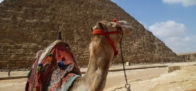 A Dutchie in Egypt